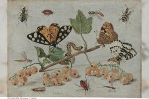 MAT | Mums med insekter? Historien visar att attityden till livsmedel kan ändras