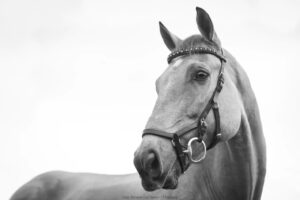HÄST | Legendarisk dressyrryttare finansierar viktig hästforskning